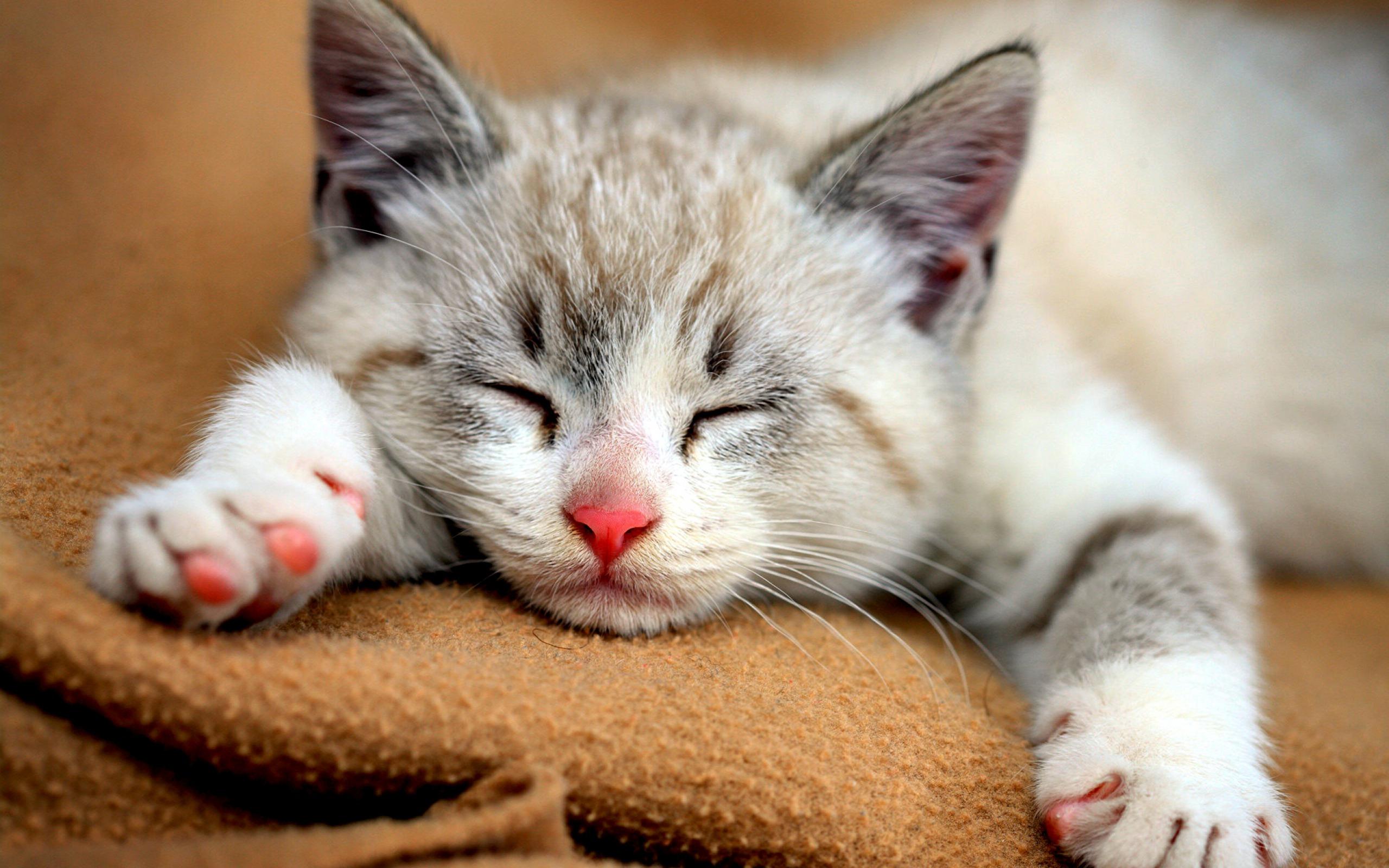 котята сон без смс