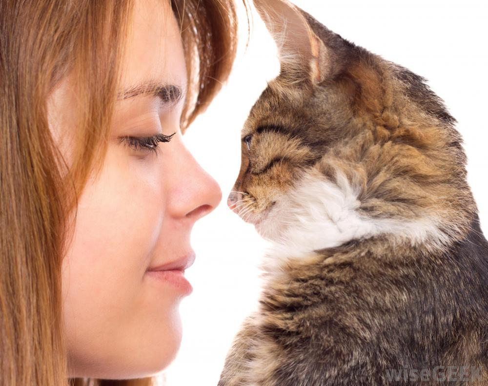 what should i give my cat for a uti