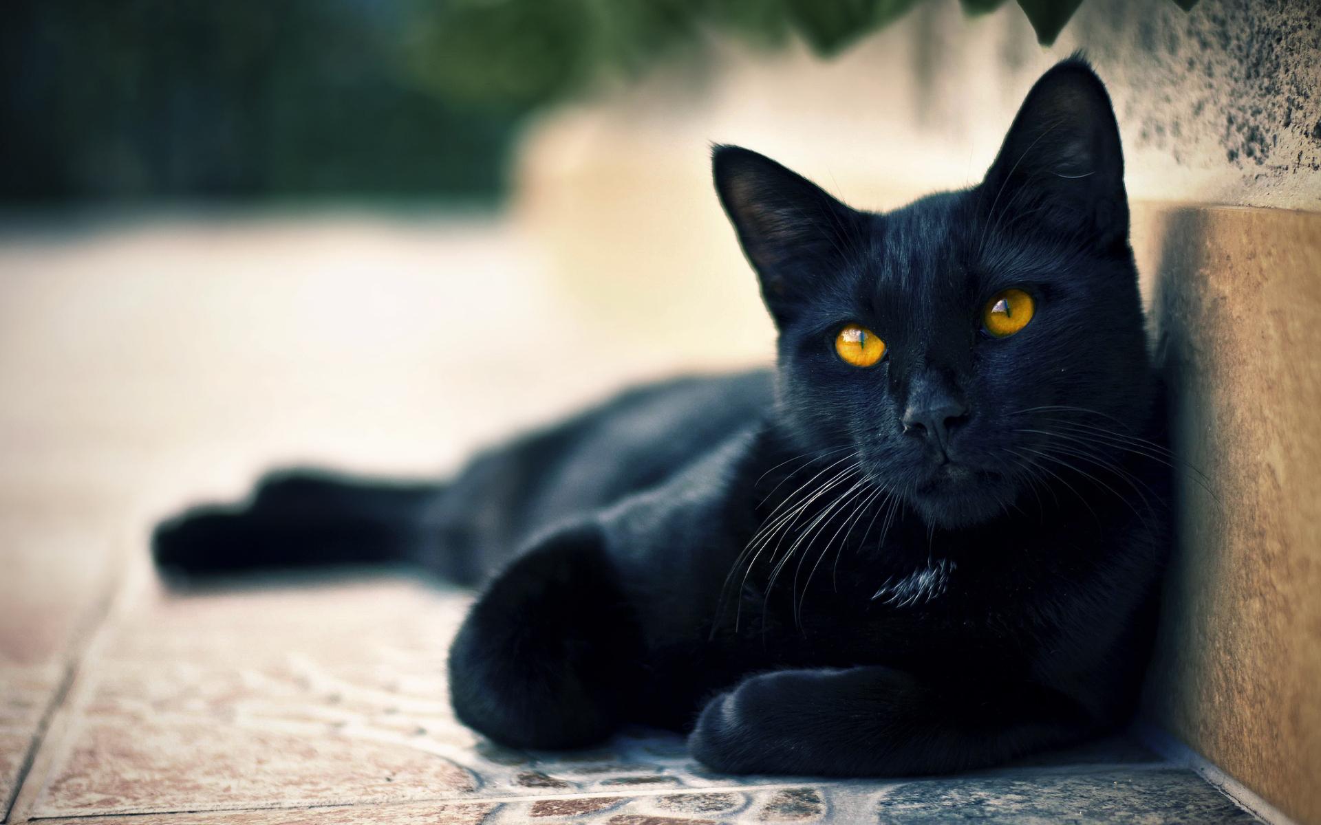 kvapkajúcej mokré mačička obrázky